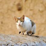 ヒヨドリの雛を猫が襲う?